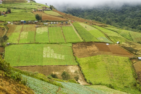 agriculture in many colors. photo