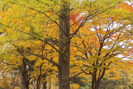 colorful tree: Colorful tree and leaf in autumn.