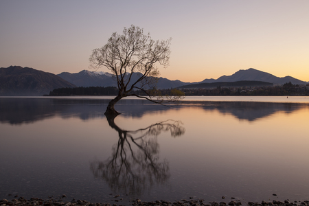 The famous tree at Lake Wanaka in sunrise, South Island of New Zealand.