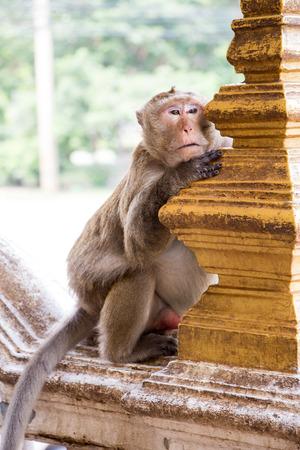 orangutang: Monkey boring