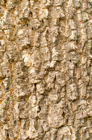 tileable: Bark of tree Seamless Tileable Texture .