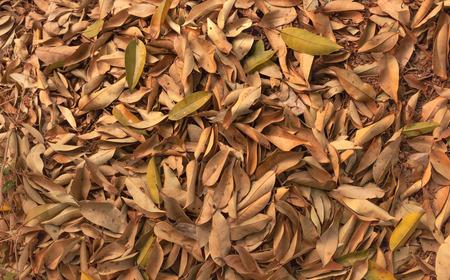 hojas antiguas: Muchos fondo hojas viejas en el verano.