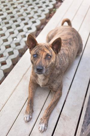 occhi tristi: Piccoli casa meno cane gli occhi tristi di aiuto. soft focus da vicino gli occhi del cane.