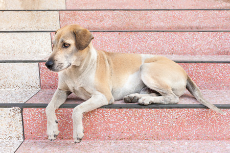 someone: The Dog waiting for someone at home . Stock Photo