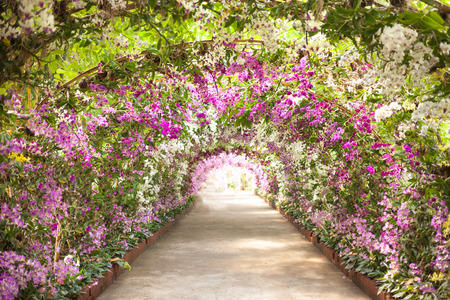 garden path: footpath in a botanical garden with orchids lining the path.