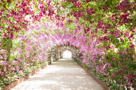jardines con flores: sendero en un jardín botánico con orquídeas bordean el camino. Foto de archivo