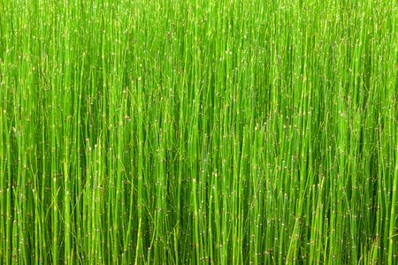 assort: abstract line of little green plant background.