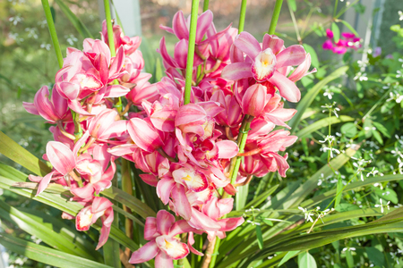 speckled: Orchid red speckled The name of The flower due to similarity of the flower.