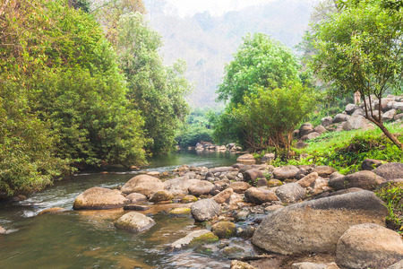 The river and stone with tree in forest beautiful nature of Asian. Stock Photo