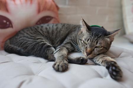 Cute little cat kitten sleeps . Stock Photo