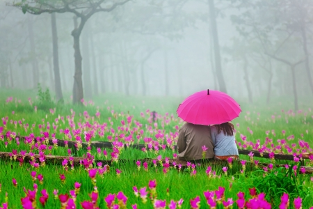 romantic scene of lover surround by pink siam tulip flower and fog photo
