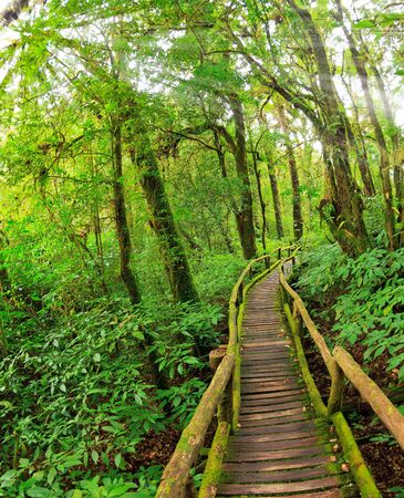 evergreen forest: Evergreen Forest of Doi Inthanon, Chiang Mai, Thailand Stock Photo