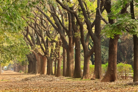 tree garden in Cubbon Park at Bangalore, India Stock Photo