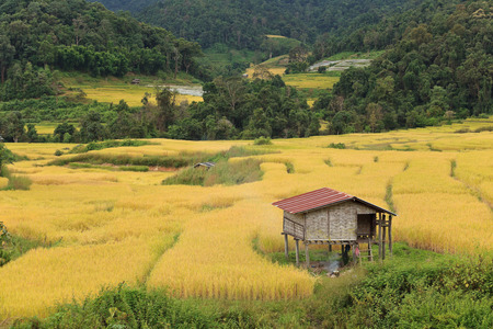 rice field in countryside of Thailand Stock Photo