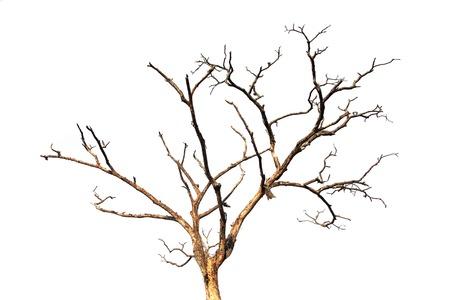 dead wood: dead tree branch Stock Photo