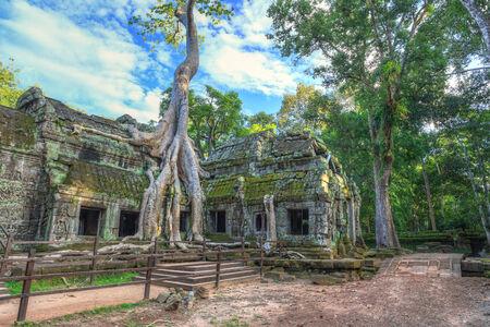 siem reap: Ta Prohm Temple at Angkor Wat, Siem Reap Cambodia
