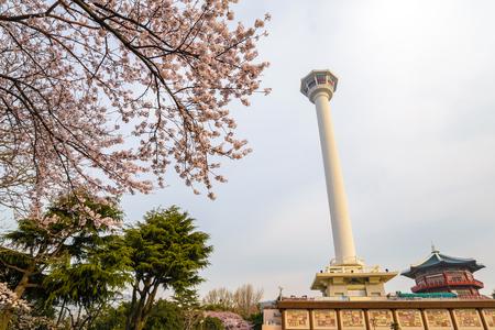 Busan Tower with cherry blossom, Busan, Korea