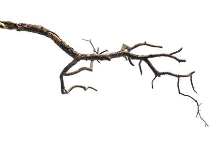 branche: Branche d'arbre isolé sur fond blanc Banque d'images