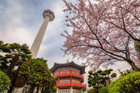 Busan Tower with spring cherry blossom, Busan, Korea