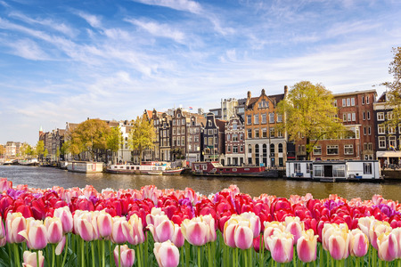 Amsterdam city skyline at canal waterfront with spring tulip flower, Amsterdam, Netherlands Stock Photo