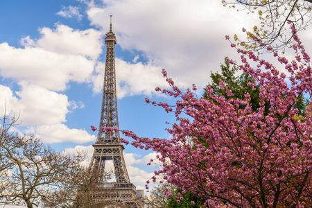 Paris France city skyline at Eiffel Tower with spring cherry blossom flower 스톡 콘텐츠
