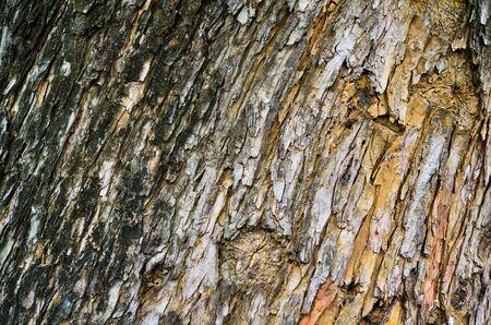 Bark of old tree Stock Photo