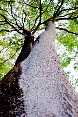 2tonetree