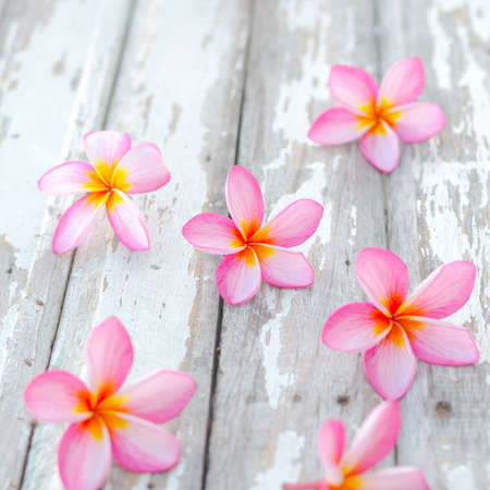 pink plumeria: two plumeria flower in front of thailand house that mean welcome Stock Photo