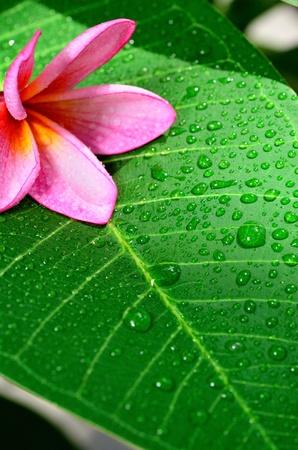 flower on leaf after rain Stok Fotoğraf