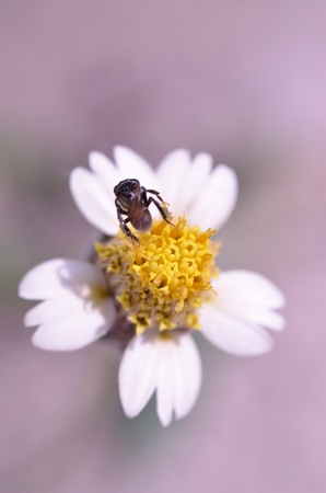 A bee working on beautiful flower Stock Photo - 11695328