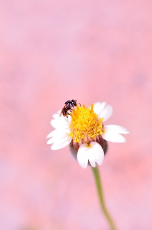 A bee working on beautiful flower photo