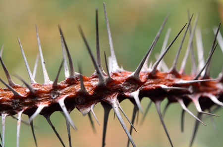 the long thorn of cactus Stock Photo