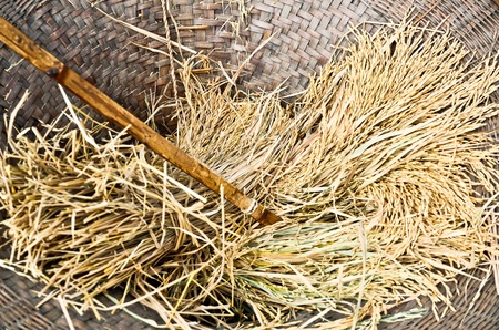 The rice in threshing basket prepare to packing