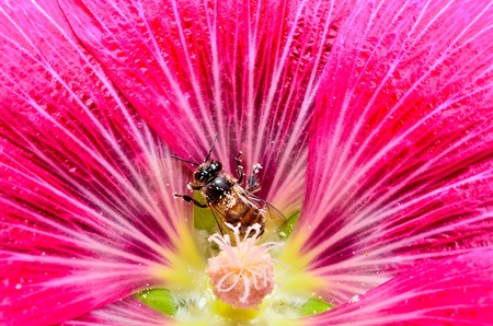 bee and big flower