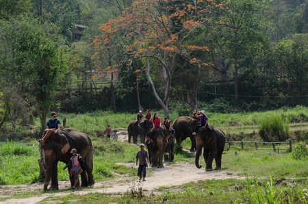 Chiang Mai, THAILAND - April. 13: Daily elephant allow tourist riding on elephant backs  , April 13, 2012 in Chiang Mai, Thailand Stock Photo - 13257699