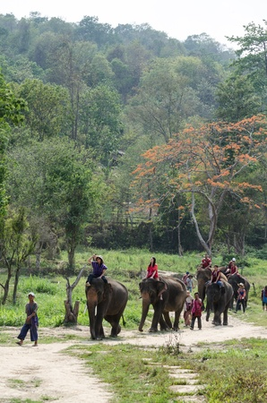 mahout: Chiang Mai, THAILAND - April. 13: Daily elephant allow tourist riding on elephant backs  , April 13, 2012 in Chiang Mai, Thailand Editorial