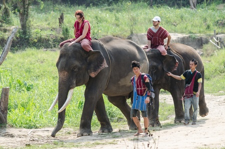 Chiang Mai, THAILAND - April. 13: Daily elephant allow tourist riding on elephant backs  , April 13, 2012 in Chiang Mai, Thailand Editorial
