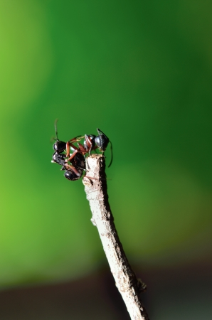 ants on a stick, finding some food Stock Photo - 13629361