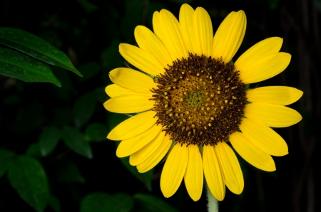 sunflower weed beautiful dark background