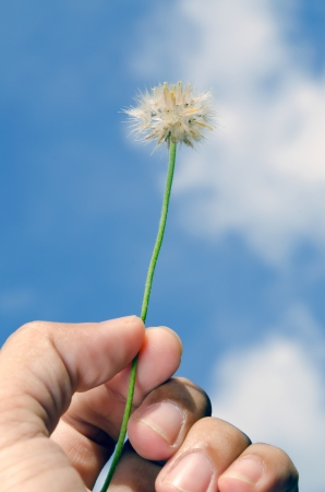the seed of grass in  hand against blue sky