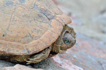 diurnal: Close up of a turtle Stock Photo