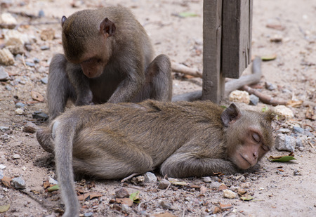 monkey sleep for friends searching tick