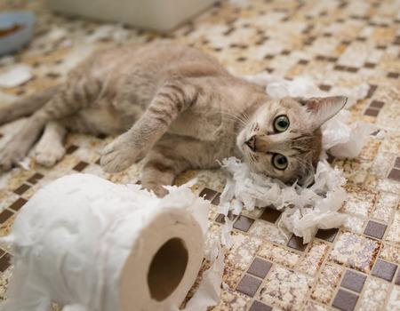 トイレット ペーパーにじゃれる子猫