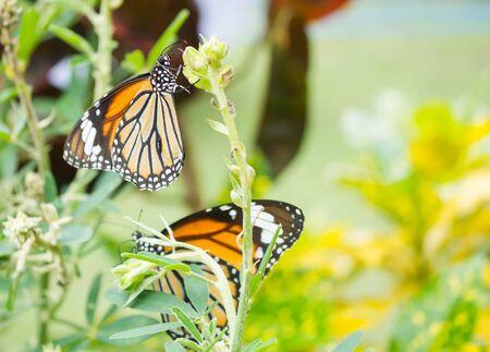 closeup view: Closeup view of butterfly