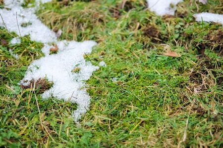 Conceptual photo of spring going after winter. Grass growing through snow