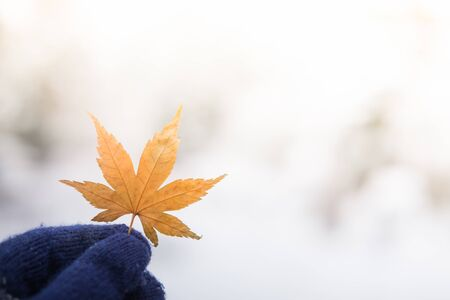 womans hand: Red leaf in womans hand with snow background Stock Photo
