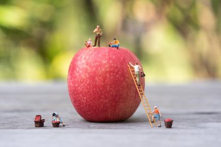 Personnes miniatures, agriculteur grimpant sur l'échelle pour ramasser les pommes rouges de la grosse pomme.