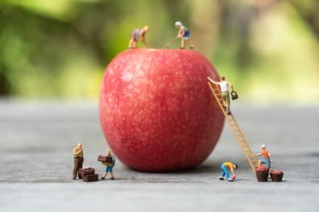Gente en miniatura, granjero subiendo a la escalera para recolectar manzanas rojas de la gran manzana. Foto de archivo
