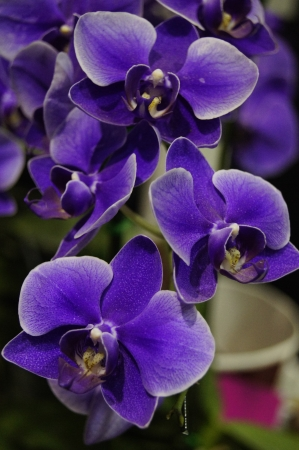 Purple orchid flower. As personal photos. To be published. Stock Photo