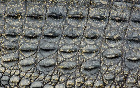 crocodile texture photo